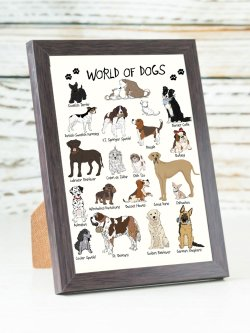 A6-World Of dogs