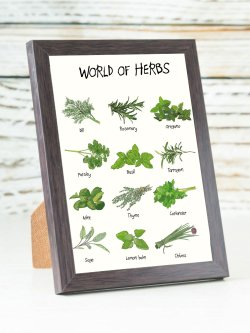 A6-World Of Herbs