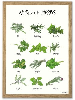 World of Herbs A4 plakat